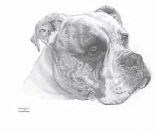 AMERICAN BULLDOG dog LE art drawing prints 2 sizes A4/A3 & cards available