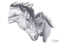 MARE & FOAL Horse LE art drawing prints  2 sizes A4/A3 &  cards Available