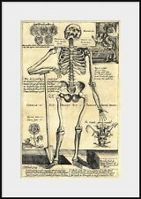 1600s SKELETON Leaning on Spade By Open Grave, NEW Fine Art Giclee Print