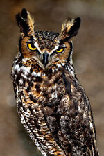 Canvas Giclee Home Prints Fine Art Great Horned Hoot Owl Photo Print Colorful