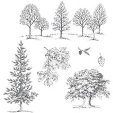 Lovely As A Tree Stamp Set (Wood or Clear)