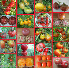 Tomatoes For Short Summers Cold Resistant 10 Seeds