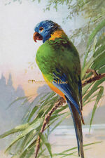 KLEIN PARROT ON A BRANCH Vintage Postcard Image Photo, Card Or Art Print KL002