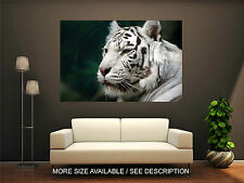 Wall Art Canvas Print Picture Wild White Tiger-Unframed