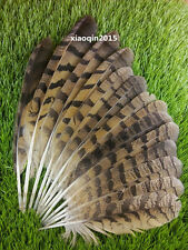 Wholesale! 10-100pcs natural male pheasant feather 25-35cm / 10-14inch