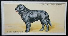 Newfoundland  Original Vintage Illustrated Card  VGC