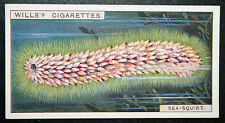 Sea-Squirt    Pyrosoma    Original 1920's Vintage Illustrated Card