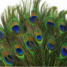 Lots Real Natural Peacock Tail Eyes Feathers 8-12 Inches Party Masquerade Decor