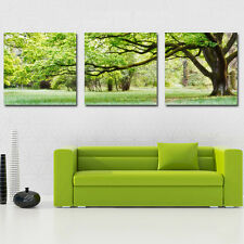 Art Oil Painting Modern Wall Home Deco Pachira Tree Picture Print Canvas No Fram