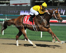 Curlin 2008 Dubai World Cup Photo