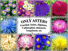 ONLY ASTERS - Garden Aster seeds, Alpinus,  Callistephus chinensis, Tongolensis