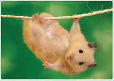 Hamster #1 Hang from a String - Laptop or Notebook Skin Decal - Many Sizes NEW