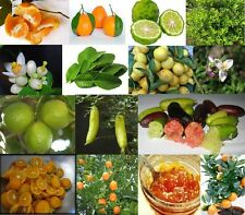 Rare and Unusual Citrus fruit tree seeds Yummy & Exotic, You choose variety!