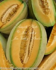 Hales Best Cantaloupe Seeds Sweet Aromatic Melon Early Producer Market Or Home