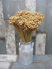 """DRIED FLAX BUNCH 100 STEMS FOR FLOWER ARRANGING RUSTIC WEDDING HARVEST 18"""""""