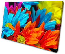 Floral Gerber Blossom flower SINGLE CANVAS WALL ART Picture Print VA