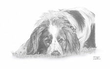 IRISH RED & WHITE SETTER dog LE art drawing print 2 sizes A4/A3 & gtg card avail