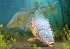 Carp Craze fishing greeting cards classic range SPECIAL OCCASIONS limted edition
