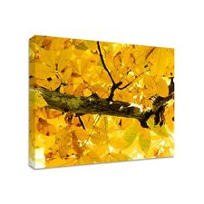 Yellow Leaves - Framed Canvas Art Print - Nature Art - Many Sizes