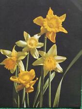 Beautiful Yellow Flowers Art Lithographed Print Vintage 1940's Wall Decor OLDIE