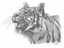 TIGER Limited Edition art drawing print 2 sizes A4/A3 &  card available