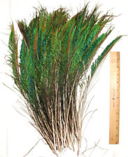 "100 Peacock Sword Feathers Green Irridecent L or R side 12-20"" length"