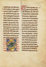 Swallow fourthquarter of 13th Century- 1277 Art Photo/Poster Repro Print Many