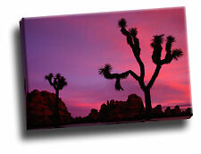 Sunset Joshua Tree National Park California Giclee Canvas Picture Art