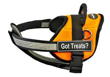 DT Works Chest Support Orange Dog Harness with Velcro Fun Patches GOT TREATS