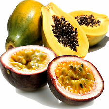 PASSION FRUIT & PAPAYA Fragrance Oil Candle/Soap Making,Bath & Body