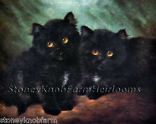 Impudence ~ Cats, Kittens ~ Cross Stitch Pattern