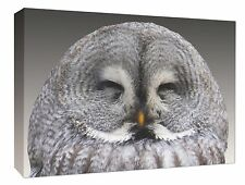 - Grey Owl Wall Hanging Picture Owl Wall Canvas Print Wall Art Decor A1/A2/A3