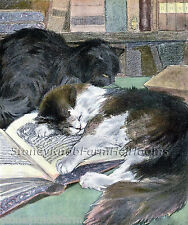 At The Library ~ Cats, Kittens ~ Cross Stitch Pattern