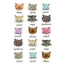 Moody Cats  Cat  Tshirt   Sizes/Colors