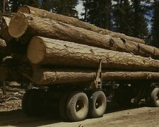 Truck load of cut Ponderosa pine trees at Malheur National Forest Photo Print