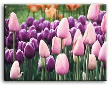 PREMIUM CANVAS ART Pink Purple Tulips Flower MANY SIZES