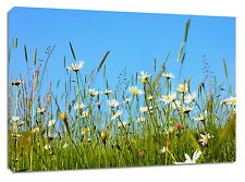 Canvas art print Daisies Meadow Framed Art Picture Print