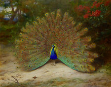HD Print Oil painting Picture Animals Peacock on canvas L179