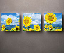 HD Print Oil painting Picture Sunflowers under the sun on canvas set of 3 W002