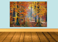 - FOREST/WOODS PICTURE AUTUMN SEASON - LANDSCAPE CANVAS/POSTER PRINT A1