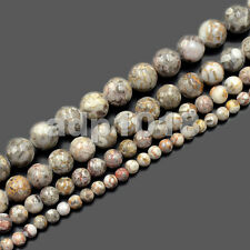 """Natural Flowery Cowry Fossil Round Beads 15.5"""" 4mm 6mm 8mm 10mm"""