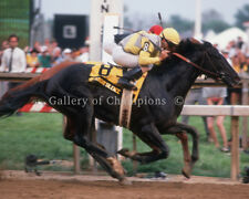 "Sunday Silence 1989 Preakness Stakes #2 Photo 8"" x 10 - 24"" x 30"""