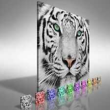 Beautiful Tiger Face Square  Canvas Print Large Picture Wall Print
