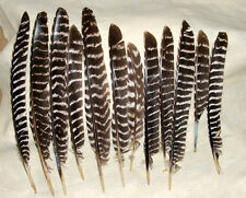 "12 Large Barred Turkey Wing Feathers  10-15"" Left or Right  Wing Fletching"