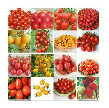 15 Styles A variety of Tomato Potted Plant Seeds Vegetable Seeds 1 Bag 20 Seeds