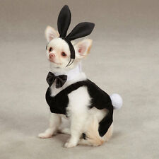 Halloween Dog Costume - Casual Canine Party Hounds BUNNY Costume - XS,S