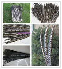 Wholesale 10-100 pcs golden  Pheasant Tail Feather 25-110 cm / 10-44 inch