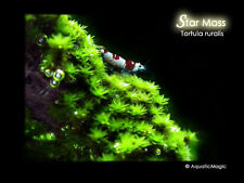 Star Moss - Live Aquarium Plant Fish Tank Java Fern Decoration CO2 Diffuser A6