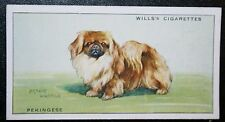 Pekingese  Original Vintage Illustrated Card  VGC