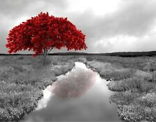 Black White Red Tree Landscapw Home Decor Wall Art Matted Picture